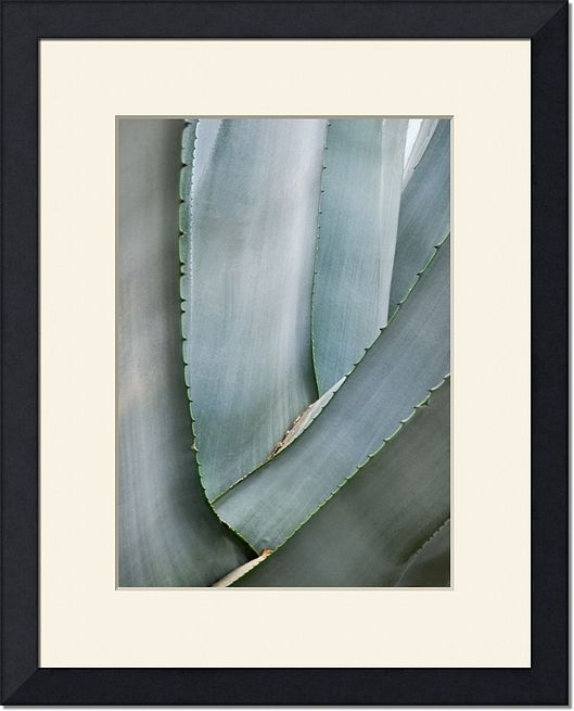Framed Agave Nature Print