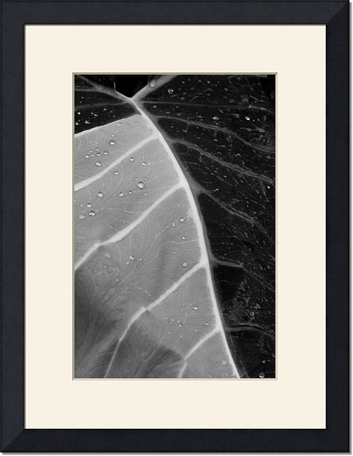 Black and White Nature Photography Print