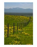 Yellow Sunflowers and Mountains Poster Print