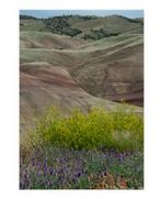 Painted Hills and Wildflowers Poster Print