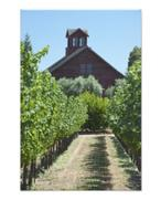 Vineyard and Red Barn Poster Print